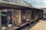 동물보호단체, 식용견 농장 및 도살장서 50마리 개 구조